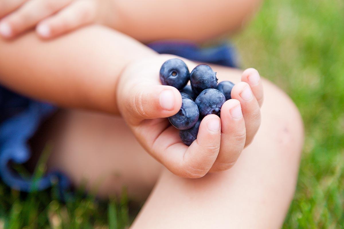 Beerenpflücken mit Kindern in Hurlach